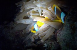 Majowe rafowanie w Morzu Czerwonym