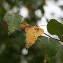 Podwodna złota polska jesień