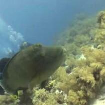 Listopadowe nurkowanie w Sharm El Sheikh